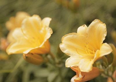 fiori-giardino-coronata-haus